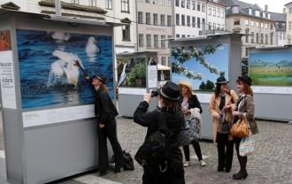 Danmark Dejligst udstillingen pΠNytorv