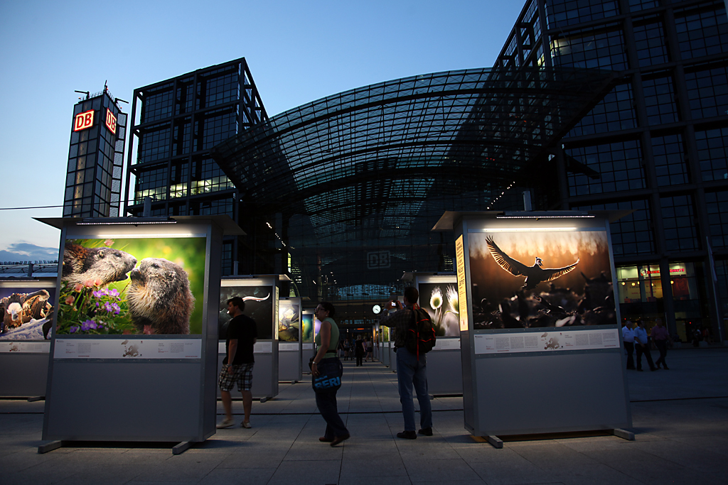 Mounting of Wild Wonders exhibition in Berlin